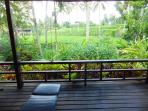 View from the terrace to ricefields