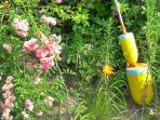 Roses and buoys