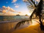 We are a short 5 minute walk to one of the most besutiful beaches in the world - Kailua Beach