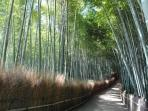 Bamboo Groves in Arashiyama