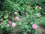 flower garden in backyard