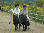 Close to Countryhouse Villa La Rogaia Umbria, Lake Trasimeno there are possibilities for Pony riding