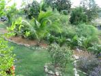 This area beside the house has palm trees and other vegitation.  Everything grows great here.