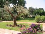 First Garden View