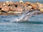 Famous Dolphin cove ( just 10 minutes drive away )