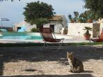Villa with pool to rent in Sicily