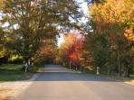 The Point Road in Fall