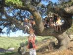 Endless space and safe climbable trees for children