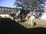 Wealth of local activities within 25 minutes drive - horse riding, tennis club