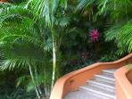 Stairway to our casa from the pool