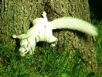White Squirrels are famous here!  You can usually see them in the trees at the far side of pond.