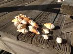Our guests bring shells back from their stroll on the beach