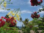 Sea View-Minister Bay-the garden is full of flowers