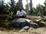 Manager Kelvin with a leatherback turtle on nearby Mjnister Bay