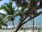 Palms and iguana behind Mampoo Hill