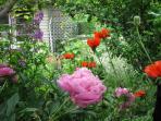 Through the Flowers
