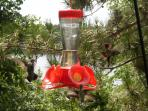 Dozens of hummingbirds!