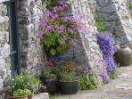 Self-seeded flowers cling to the walls