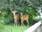 Watch the deer right outside your door at the Crews on INN.