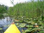 Kayaking through the marsh