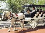 Take a carriage tour in Historic Wilmington