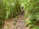 Bamboo Hiking Trail nearby.