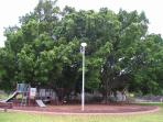Our local park