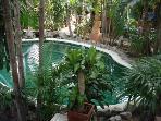 Pool set in tropical garden