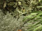 Fresh fragrant herbs