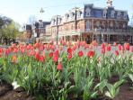 Town in Spring - 1 block away