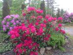 June splendour