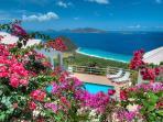 Vibrant tropical Garden