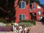 Ocean View and Dog-Friendly Home