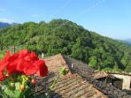 rooftops of the village of Luscignano