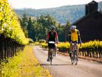 Cycling Amount the wineyards