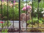 Guest Photo Deer in Yard