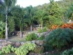 Our terraced palm garden. One of many areas in the 0.75 acre landscape.