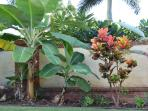 Tropical Landscaping with Banan Fruit Trees and Flowers