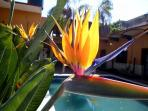 The Bird of Paradise bloom all year round.