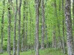 Foresta Umbra - The Shady Forest, the largest broad-leaf forest in Italy