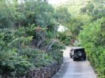 Lush entry driveway exotic foliage