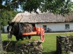 Traditional Farms in Muckross across from our home