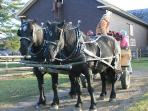 WAGON RIDE AT BILLINGS FARM AND MUSEUM IN TOWN, SLEIGH RIDES IN WINTER