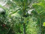 Villa Ocean Bali Garden