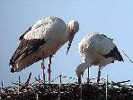 Birdwatchers love the Padule di Fucecchio, where even storks (uncommon in Italy) come to nest