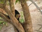 no the monkeys are not a problem ,but they will come fairly close to bannanas