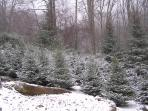 This is the Christmas Tree Farm next to Fox Run.  You can go at Christmas and cut your very own tree