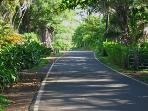 Haneo'o Road, the road to the Hamoa Beach Cottage