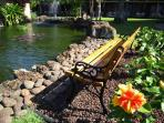 Relax by the koi pand
