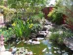 Gold fish pond and stream and waterfall